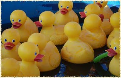 Duck Pond Rental